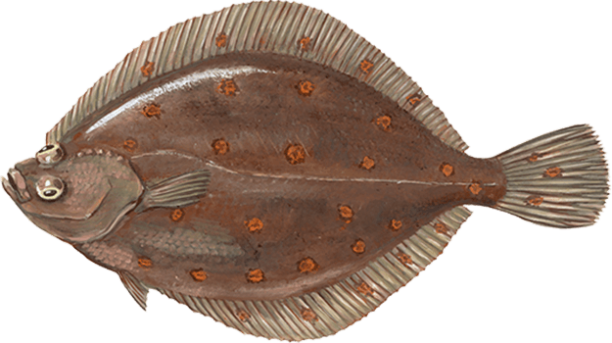 Learn About Fish Young S Seafood