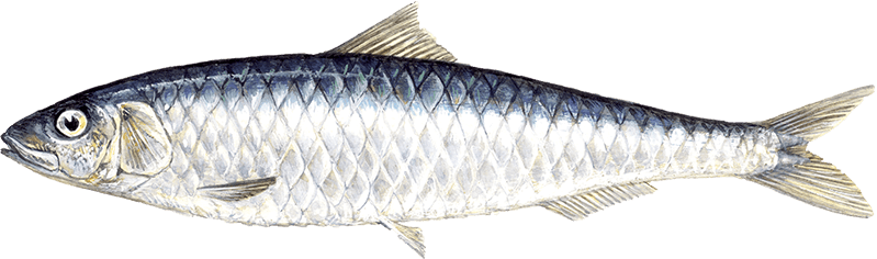 Top 7 foods help to reach a healthy weight brought in time for Healthiest types of fish